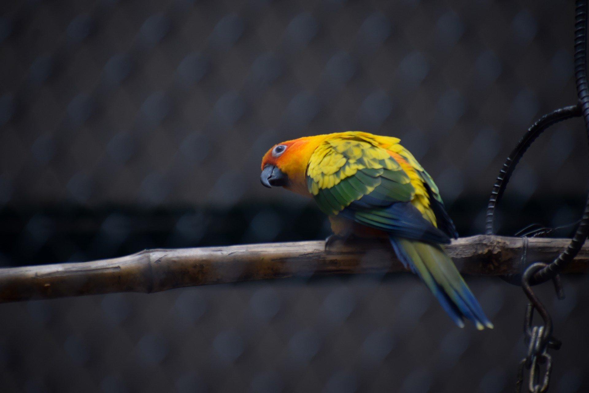 Gestione pappagalli