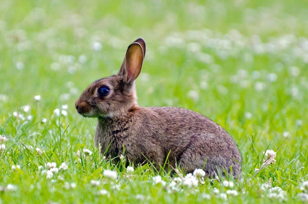 Conseguenze di una dieta sbagliata per il coniglio