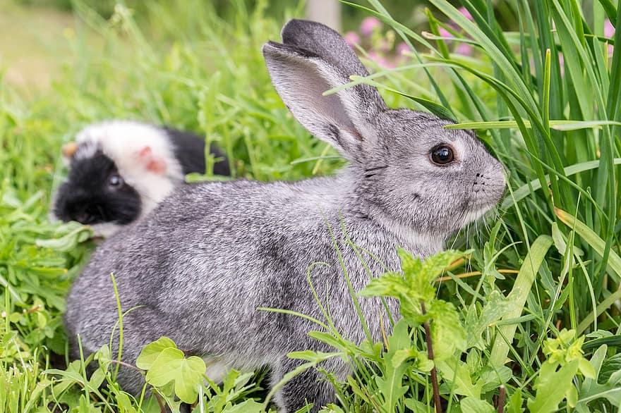 Blocco intestinale del coniglio, possibili cause e come comportarsi