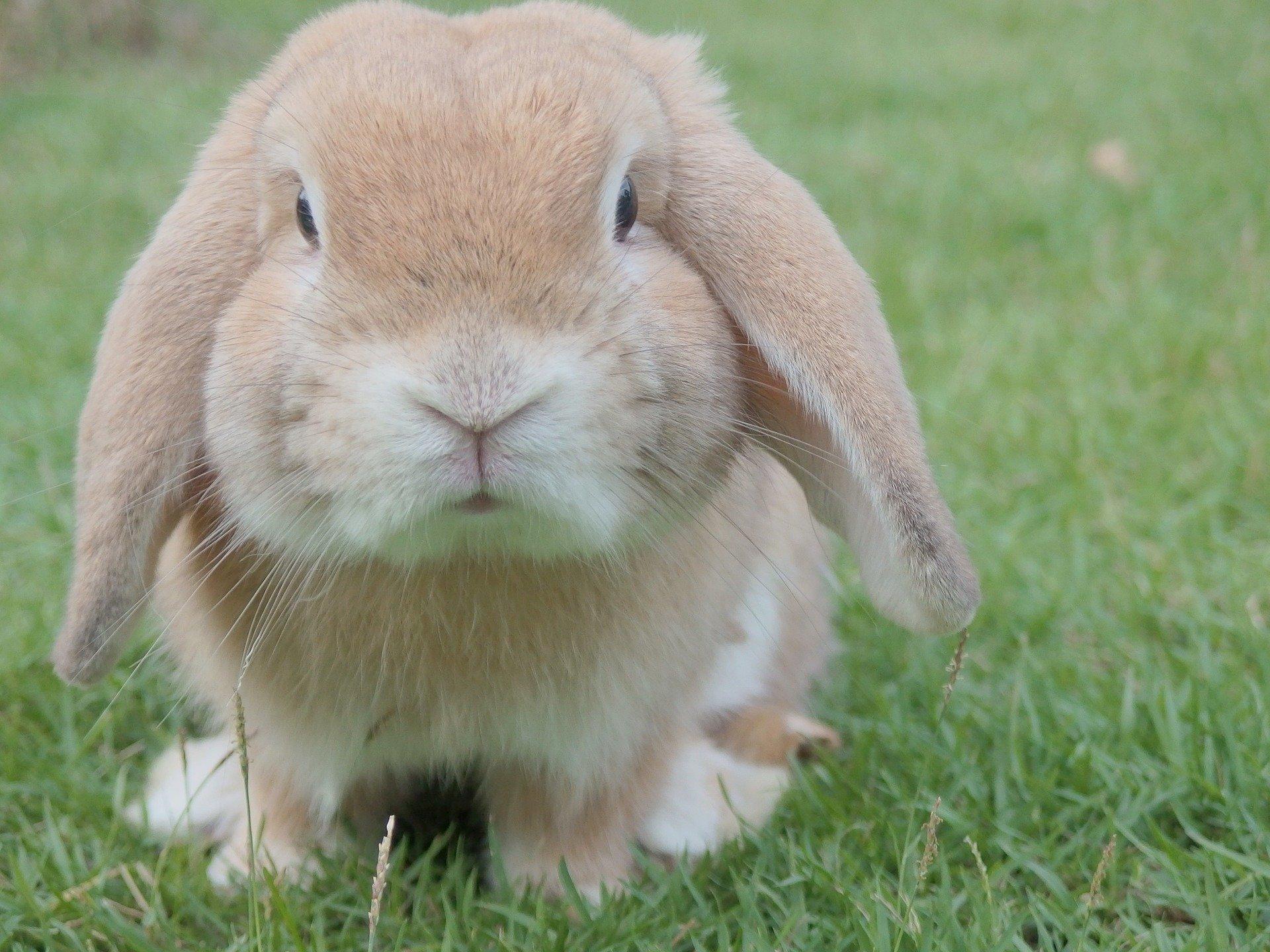 Gestione del Coniglio