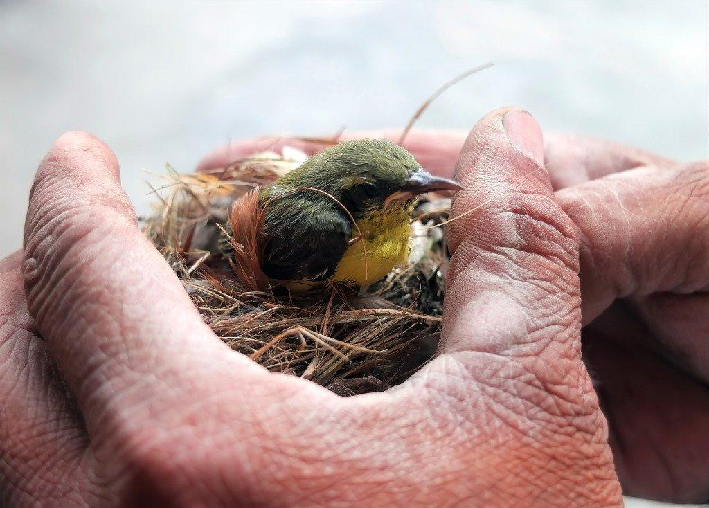 Cosa NON fare quando si trova un uccello selvatico