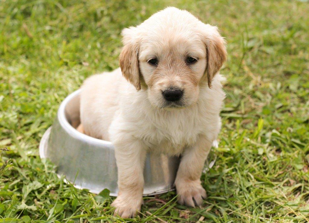 Reazioni avverse al cibo (RAC) e dieta ipoallergenica nei cani e nei gatti